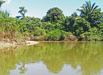 Monkey River - Estuarine lower reach of Monkey River, Belize