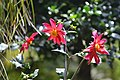 Monte Palace Tropical Garden DSC 0133 (37582511895).jpg