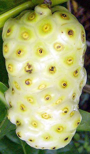 Noni fruit in Honolulu