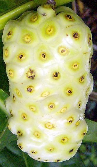 Morinda citrifolia - Noni fruit