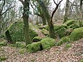 Moss-covered rocks, near Sharpitor - geograph.org.uk - 1197643.jpg