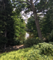 Mount Auburn Cemetary Terrain.png