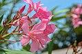 Mt. Vernon Garden flower (7578060888).jpg
