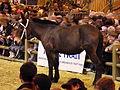 Mule poitevine SDA2012.JPG