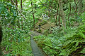 Myohoji Garden Stairs Kamakura.jpg