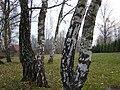 NAŁĘCZÓW SANATORIUM CICHE WĄWOZY 03 - panoramio.jpg