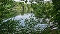 NSG Pellini-Weiher FFH-Gebiet Indemündung Uferbereich - Am Weiher IX.jpg