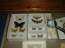 photo de la collection de papillons de Nabokov