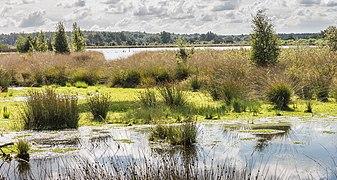 Nationaal Park Drents-Friese Wold. Locatie Fochteloërveen 01-09-2020. (actm.) 04.jpg
