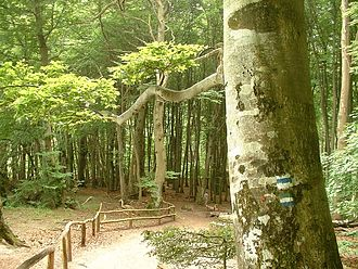 Jasmund National Park - The beech forest