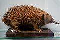 Natural History Musem, Dublin (6915990491).jpg