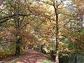 Naturdenkmal, Amerikanische Roteichen- Allee,Cottbus, Sommer 2013.jpg