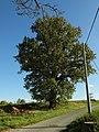Naturdenkmal ND182 Eiche Fiebiggasse Wallroda.jpg