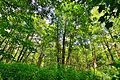 Nature Park 18.JPG