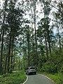 Nature Rangala Ella Road 1.jpg