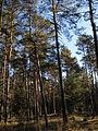 Naturschutzgebiet Grünberg.JPG