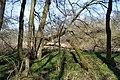 Naturschutzgebiet Haseder Busch - Im Haseder Busch (38).jpg