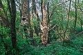 Naturschutzgebiet Nägelestal 01.jpg