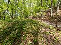 Naturschutzgebiet Nr. 158 Greifenstein (Gebiet an der Burg Greifenstein) 7 Sublocation DE-TH WDPA ID 163316.jpg