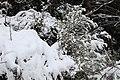 Neige à Saint-Rémy-lès-Chevreuse le 7 février 2018 - 15.jpg