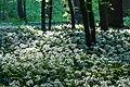 Nordkirchen, Naturschutzgebiet Ichterloh -- 2018 -- 2314.jpg