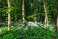 Nordkirchen, Naturschutzgebiet Ichterloh -- 2018 -- 2324.jpg