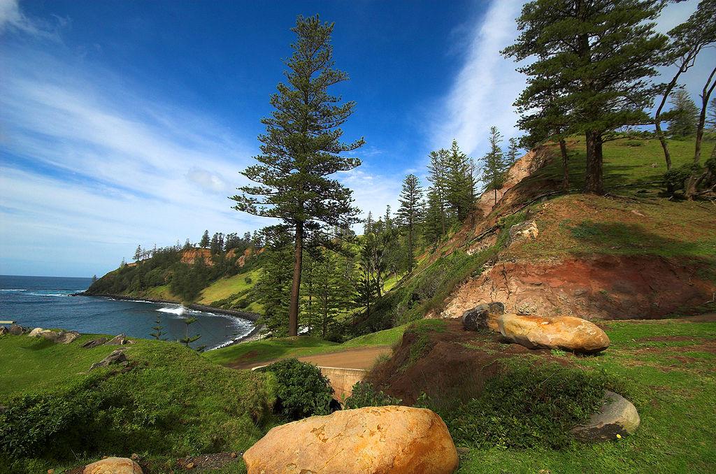 Norfolk-Island-Pines