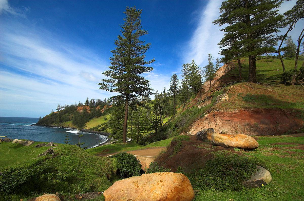 Norfolk-Island-Pines.jpg