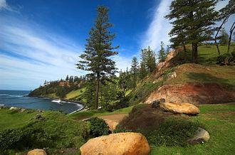 Araucaria heterophylla - Norfolk Island pines, Norfolk Island