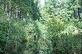 Novadgrāvis, Olaines pagasts, Olaines novads, Latvia - panoramio.jpg