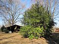 Oaklawn Garden 2011-01-29 Poplar Pike Germantown TN 65.jpg
