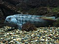 Océanopolis - les aquariums 006.JPG