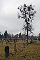 Old tree at the Jewish cemetery of Vienna.jpg
