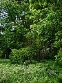 Oldflat Wood - geograph.org.uk - 1361111.jpg