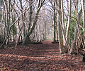 One of the paths traversing Lower Wood Nature Reserve - geograph.org.uk - 1614916.jpg