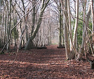 Lower Wood, Ashwellthorpe