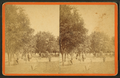 Orange Grove, at Mrs. Mirchell's residence, Jacksonville, Fla, from Robert N. Dennis collection of stereoscopic views.png