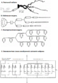 Original neuron, a cable model & a compartmental models (ru).png