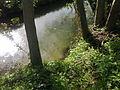 Orties sur une rive du Train à Grez-Doiceau 001.jpg