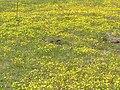 P9210030 Tienie Versfeld Wildflower Reserve.JPG