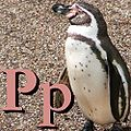 P is for Penguin.jpg