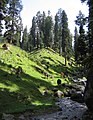 Pahalgam views 06.JPG