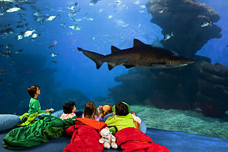 "Palma Aquarium - The ""Shark sleepover"""
