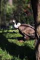Parc Zoologique de Paris, 5 April 2014 (10).jpg