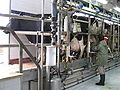 Pardes Hanna Ag School morning milking.jpg