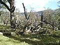 Parque Nacional Los Glaciares - panoramio (12).jpg