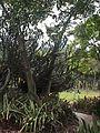 Parque del Este - Jardin Xerofito - 2001 Caracas - Venezuela 002.jpg