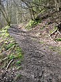 Path in Clough Wood - geograph.org.uk - 455537.jpg