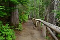 Path to the lower observation point for Narada Falls, Mount Rainier National Park 01.jpg