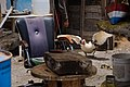 Pato en la Jolatería en Puerto Naos 02.jpg